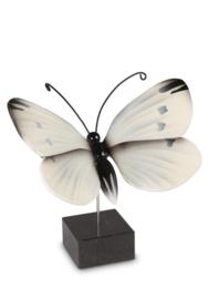herinnering / as vlinder Koolwitje VL196003