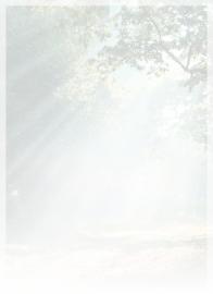 Bos met zonnestralen - dankbetuigingkaart