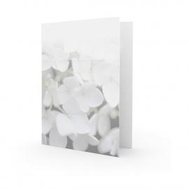 Grote witte hortensia - dankbetuiging