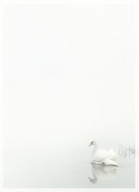 Zwaan - dankbetuigingkaart