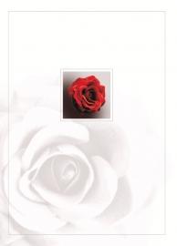 Rode roos - dankbetuigingkaart