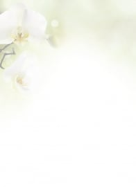 Witte orchidee - dankbetuigingkaart