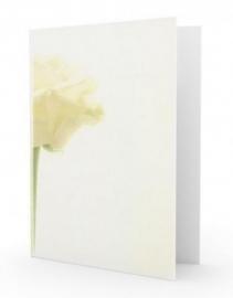 Grote witte roos - dankbetuigingkaart