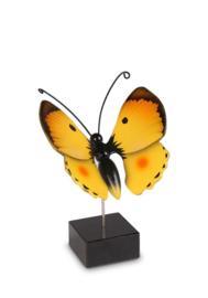 herinnering / As vlinder Luzerne VL196002