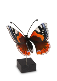 herinnering / As vlinder Atalanta VL196005