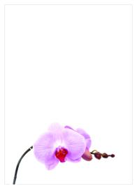 orchidee roze - dankbetuiging
