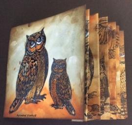 Owl Big 2