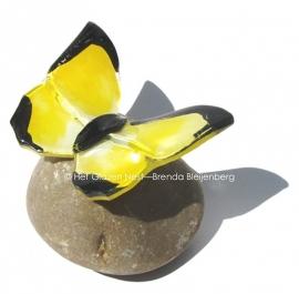 gele vlinder met zwart randje als mini urn