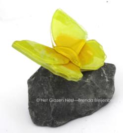 Kleine gele vlinder op grijs basalt