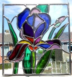 """Glas in lood raam """"Paarse Iris """""""