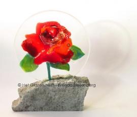 Rode roos in heldere cirkel, op graniet