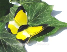 kleine gele vlinder met zwarte randjes