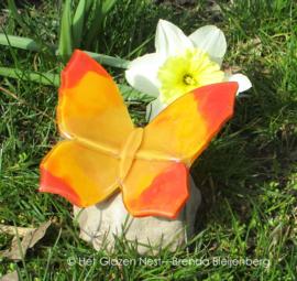 Oranje vlinder met spitse vleugels op kei