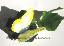 Kleine geel en witte glazen vlinder