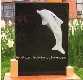 dolfijn op zwart