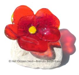 oranje bloemetje op steen