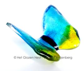 vlinder in dansend geel en aqua