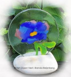 Blauwe bloem op Rijnkiezel