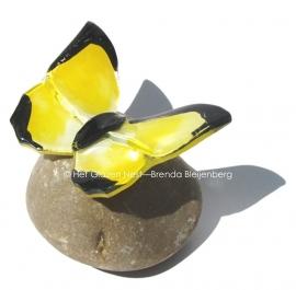 Gele vlinder met zwart randje