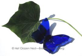 klein blauw vlindertje