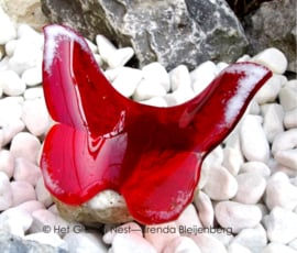 Rode vlinder  met witte accenten