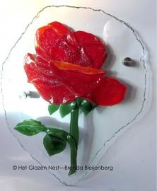rode roos op blank glas