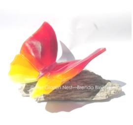 Grote vlinder in rood, oranje en geel