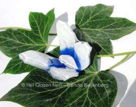 wit en blauw vlindertje