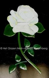 witte roos met ronde blaadjes als ornament