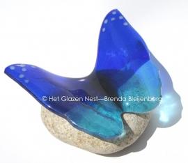 vlinder in kobalt en aqua blauw