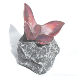 vlinder in Lila en oud roze op basalt