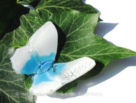 wit met aquablauw vlindertje