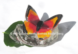 Oranje vlinder met zwarte randen op ruw glas