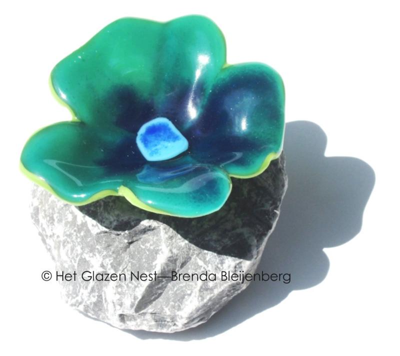 viooltje op steen in zee groene kleuren