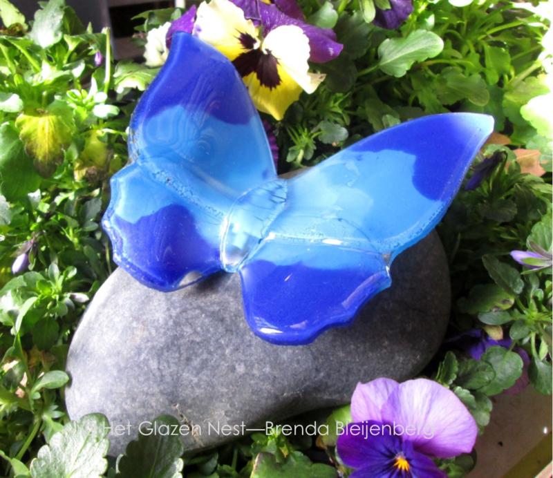 Vlinder in blauwtinten op een gladde kiezel