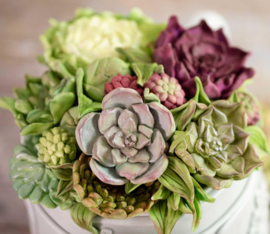 Succulent mold ( Karen Davies)