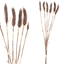 706010 | Twig Plant brown cereal plant spray | PTMD