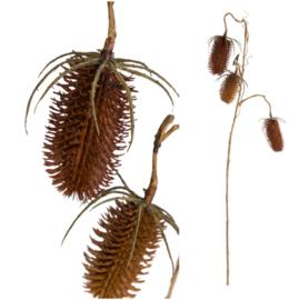 697153 | Twig Plant brown dipsacus spray | PTMD