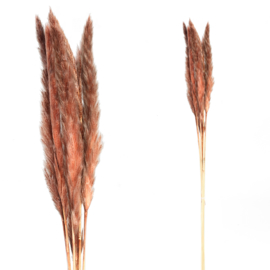 705698 | Dried Twig red brown pampas grass small | PTMD