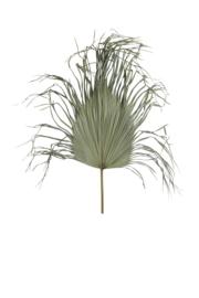 7441984 | Ornament Ø85 cm PALMAE palm blad | Light & Living - alleen afhalen