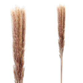 705696 | Dried Twig dark brown pampas grass long | PTMD
