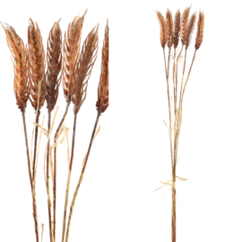 706009 | Twig Plant light brown cereal plant spray | PTMD