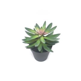 403114 | Plant - Succulent Vetplant | Mattz