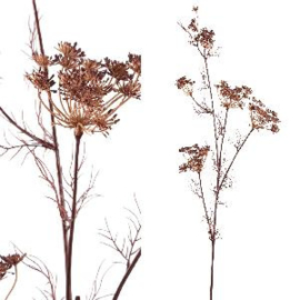 705620   Twig Plant brown large queen ann lace   PTMD
