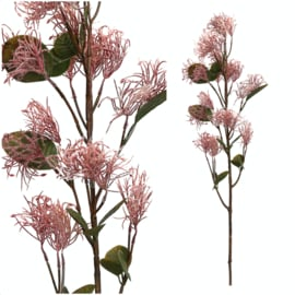 695156 | Garden Bloem Roze cotinus coggygria tak | PTMD