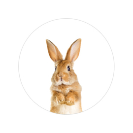 24 ronde stickers   Rabbit / Konijn