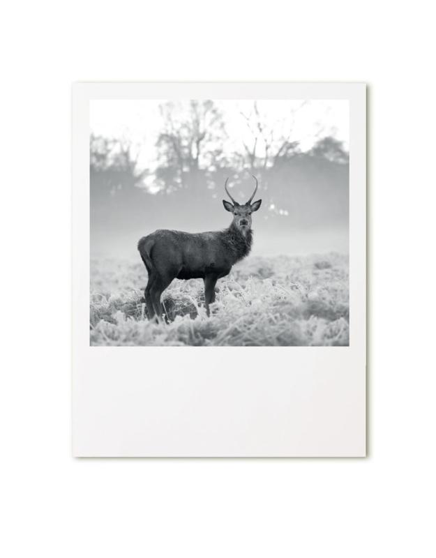Retroprint poster- hert