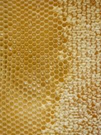 Honingraat geel