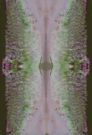 Sardine Pink Green