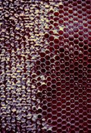 Honey Closed Ruby Yellow
